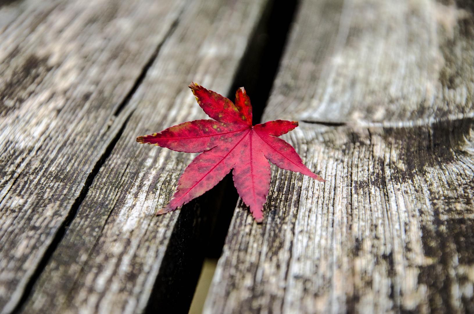 Übergang zum Herbst