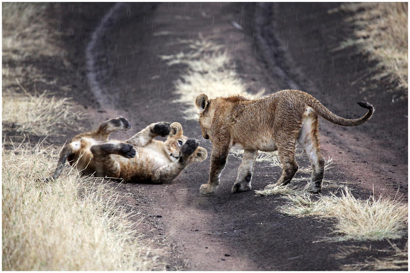 -übermütig- Tansania 2013