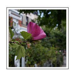 Übern Gartenzaun