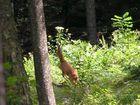 Überraschende Begegnung im Wald 2