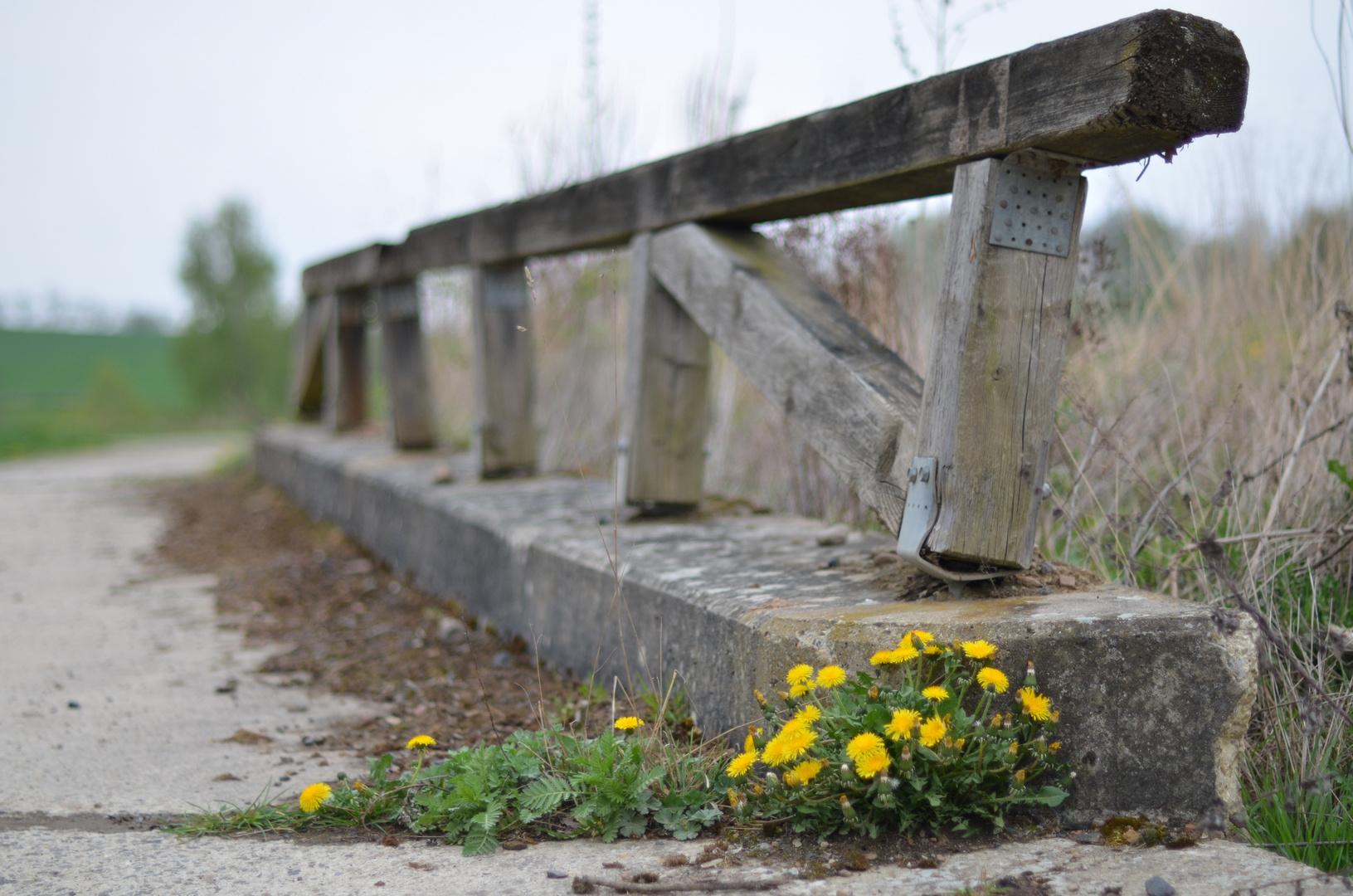 Überreste einer kleinen Brücke