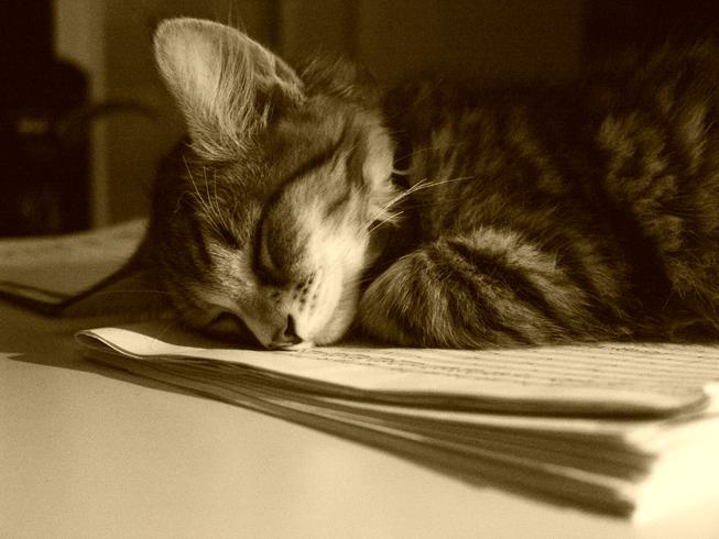 über's notenlesen eingeschlafen