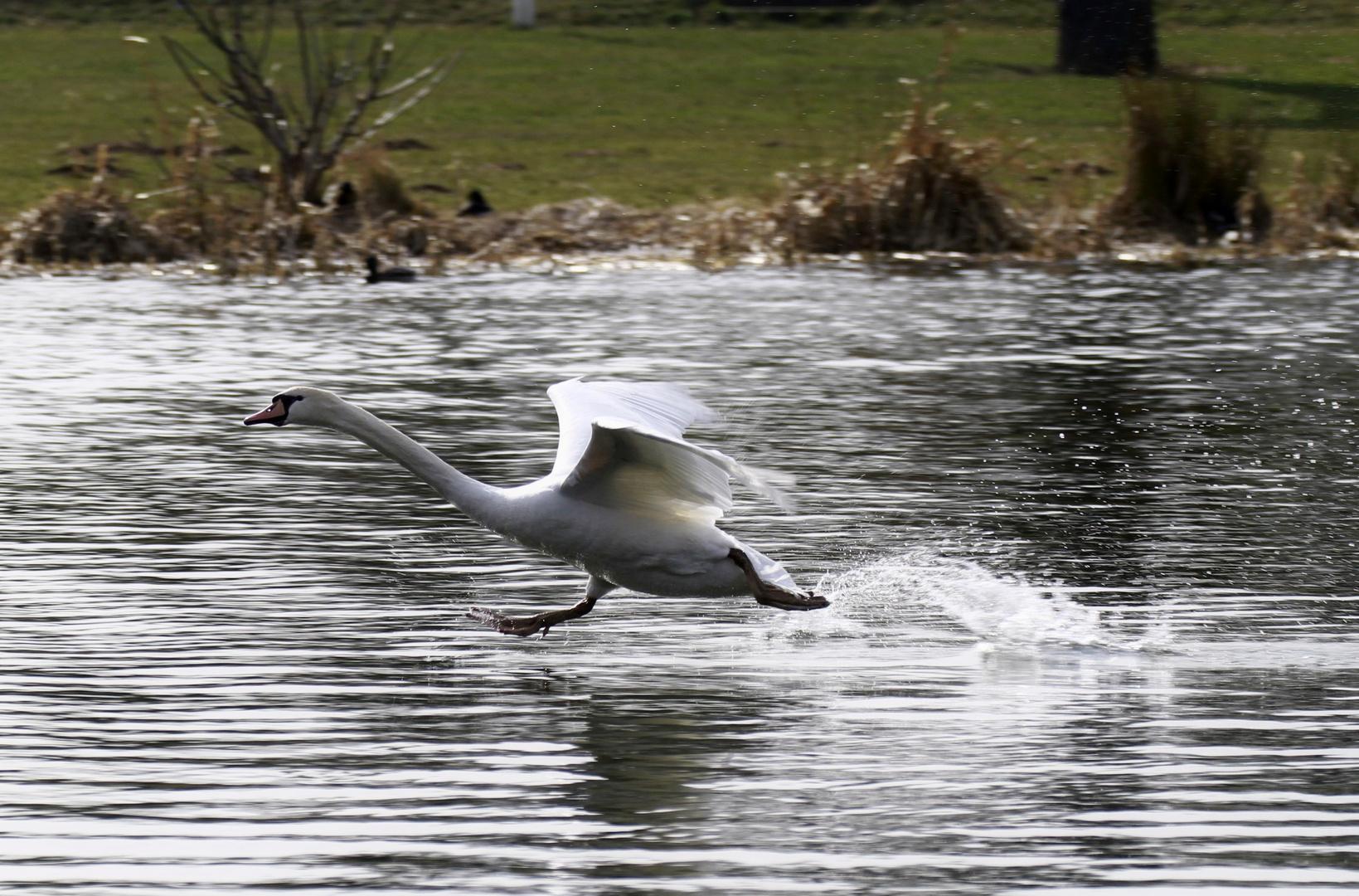 ,, übers Wasser laufen...''