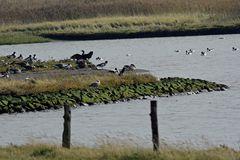Übersicht mit Wassergeflügel am Nessmersieler Speicherpolder