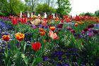 Überwätigende Blütenpracht