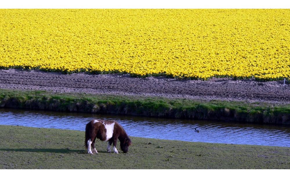 Überwiegend Gelb