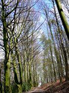 Uellendahler Forst