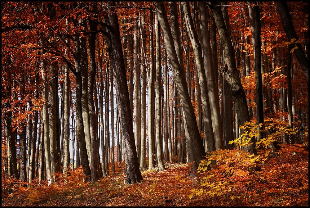 üppige Herbstfarben ...