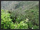 Üppige Natur auf Teneriffa im Teide Gebirge, Feb 2014