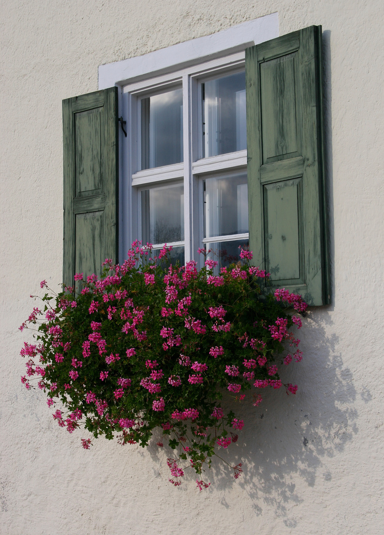 Üppiger Fensterschmuck