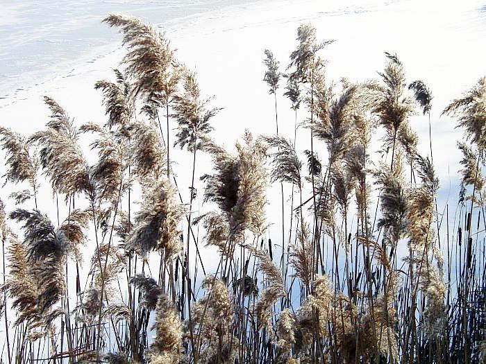 Ufer am gefrorenen See