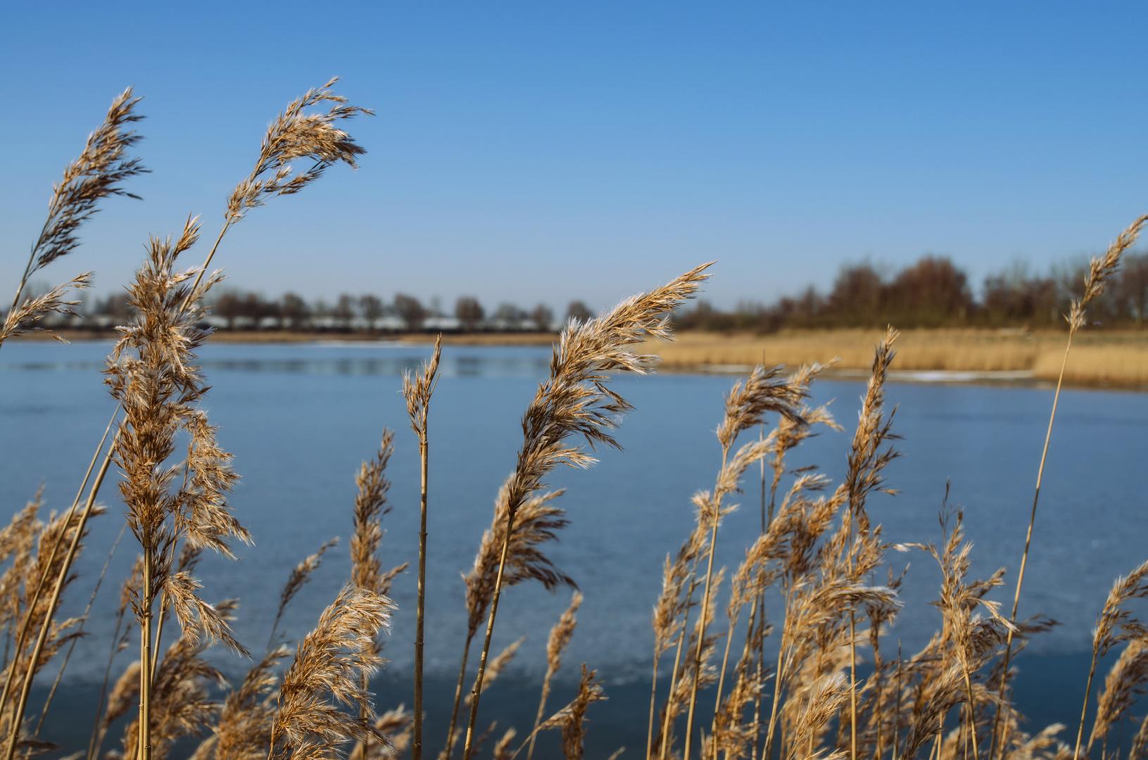 Uferbewuchs am Husumer Nordseestrand