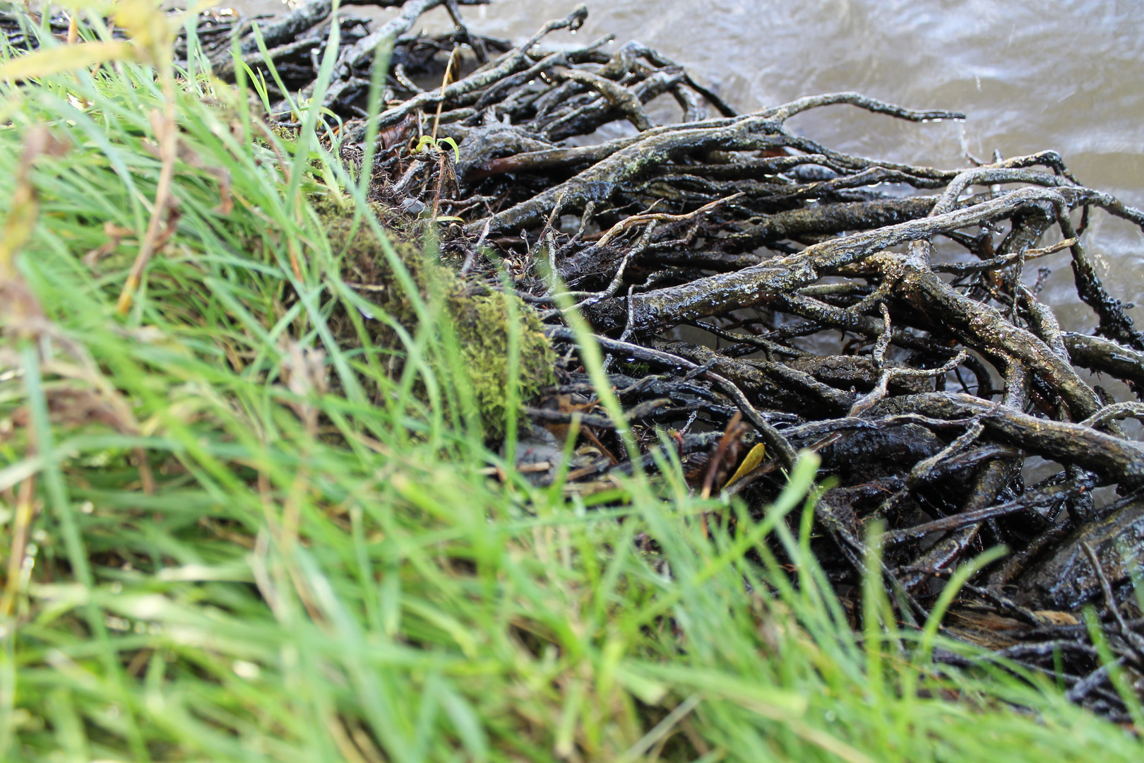 Uferbewuchs am Schweriner See