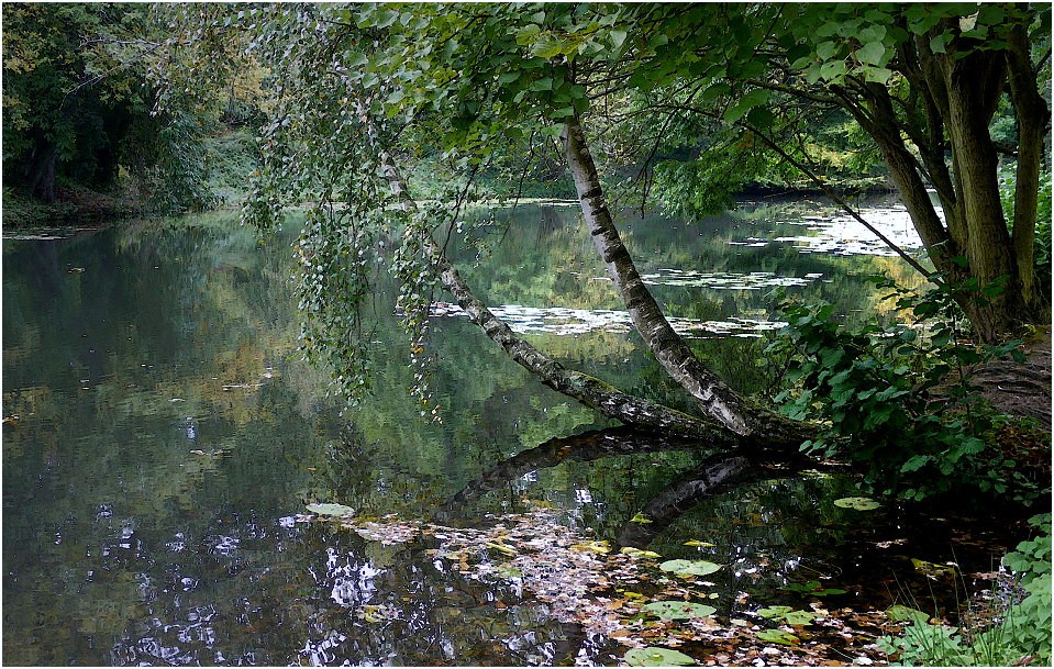 Uferbirke