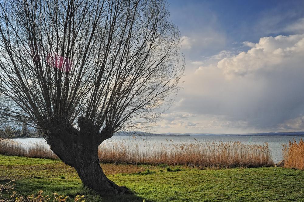 Uferlandschaft im Vorfrühling