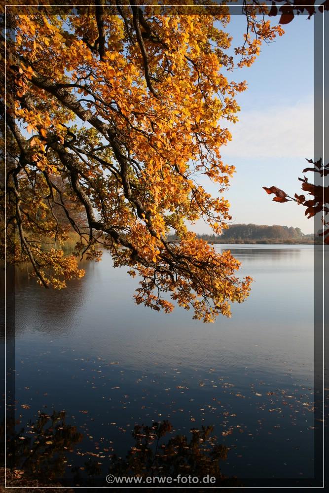 Uferstimmung mit Herbstwald