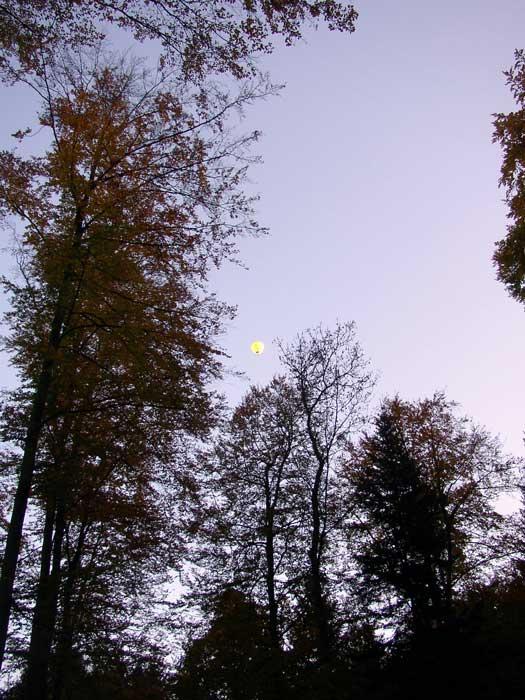 UFO über'm Herbstwald