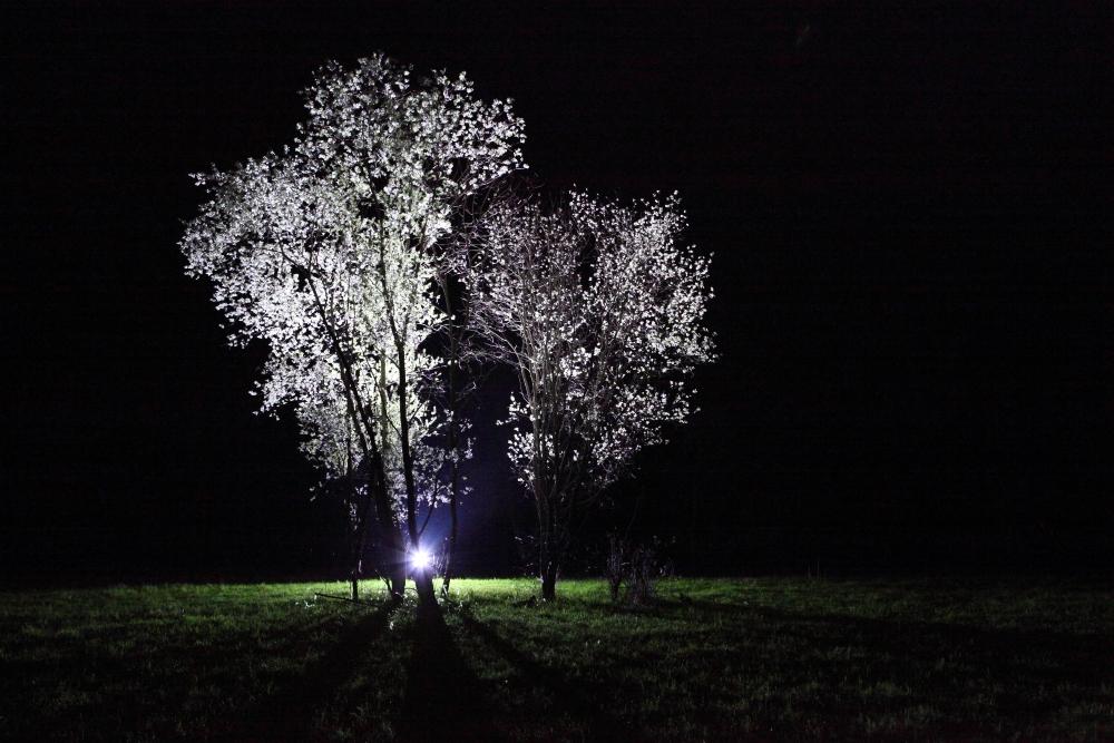 Ufos landen immer hinter Bäumen