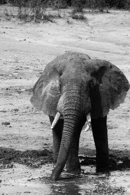 Uganda, Elefant II
