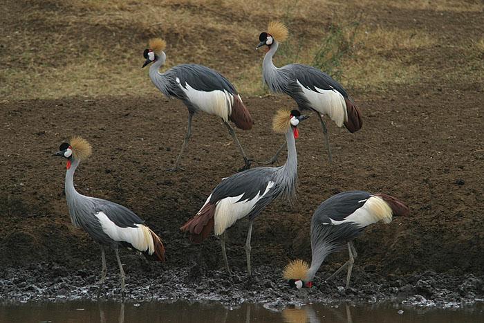 ugandas wappentier