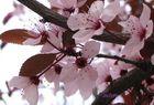 uggiosa primavera