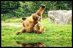 Uiii... ist mir schlecht. Halt einer mal die Bäume fest!  ( Kodiakbär )