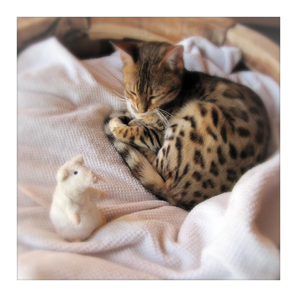 Ujamaa & Mouse