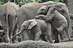 Uli & Shawu ... üben die Elefanten - Pyramide
