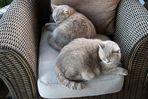 Ulli und Lienchen bei ihrer Siesta