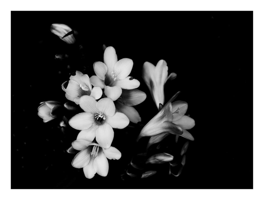 Ultimi petali d'inverno