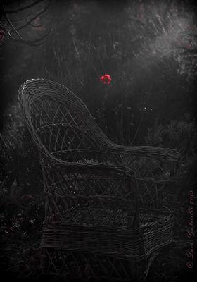 Ultimo raggio di sole su rosa rossa.