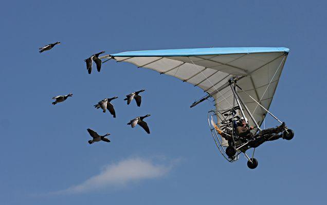 Ultraleichtflugzeug mit Gänse-Eskorte