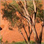 Uluru Impressions #3