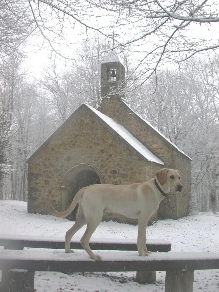 Ulysse, un jour d'hiver