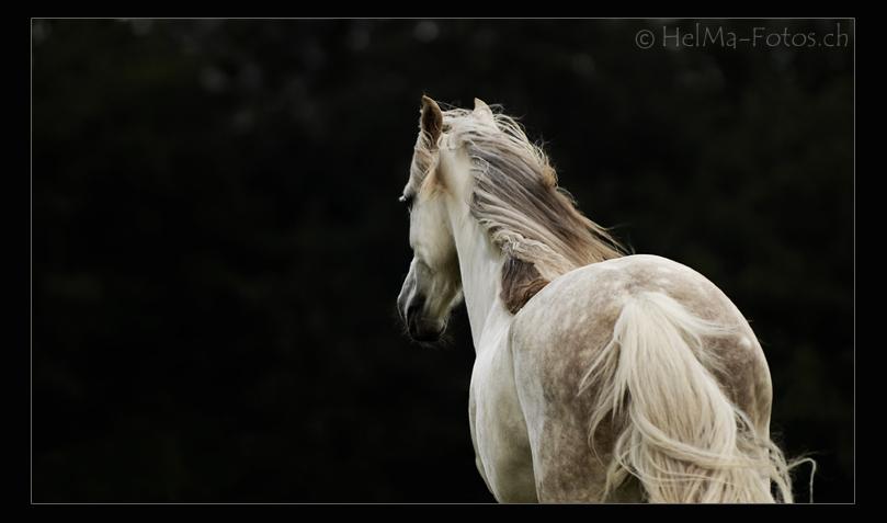 Um das Pferd zu erschaffen...