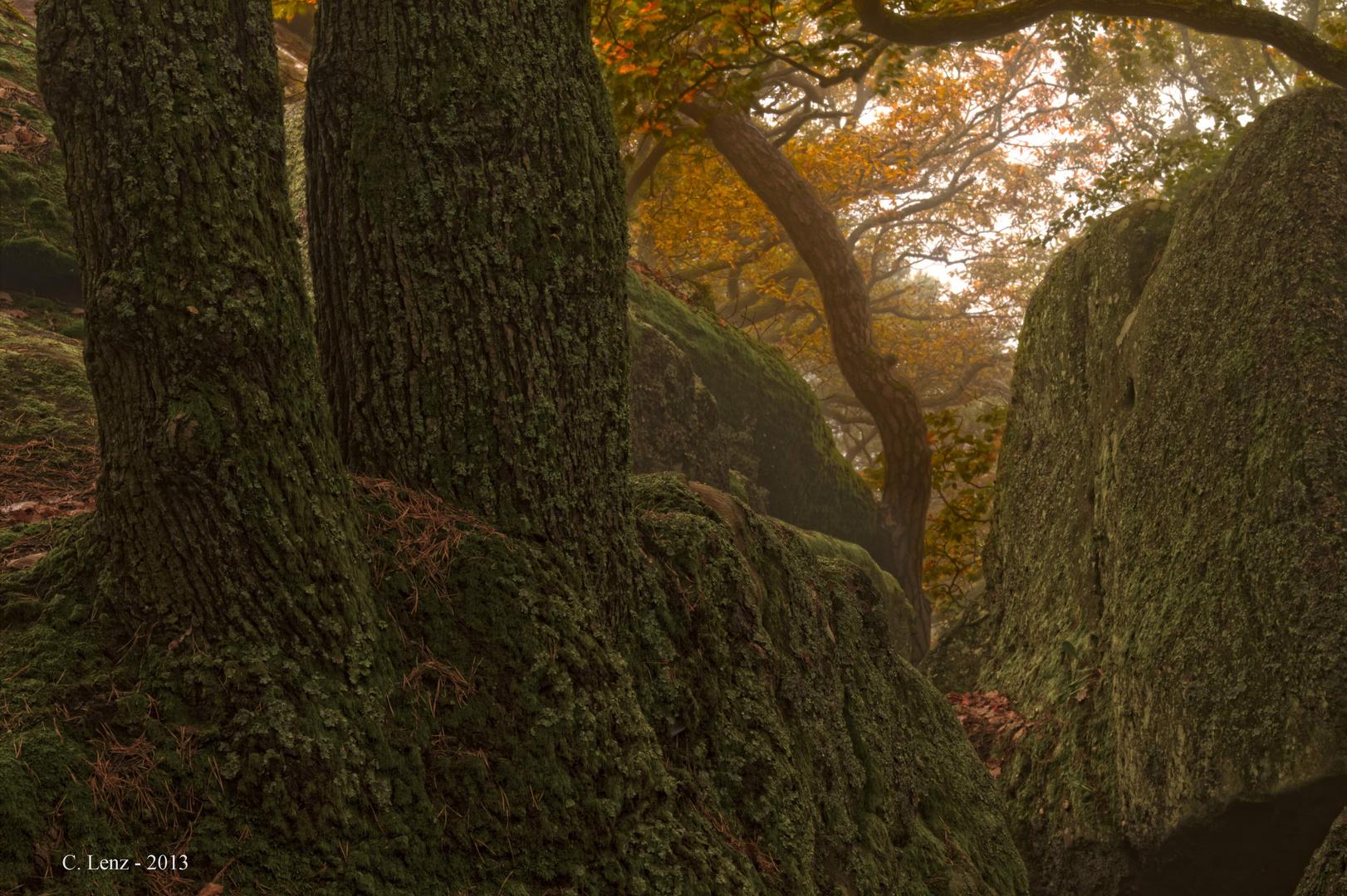 Um den Heidenfels, Bad Dürkheim 4 (Nebel)