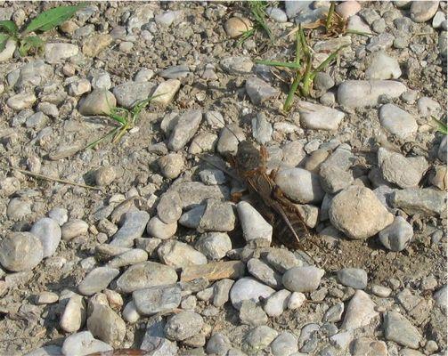Um welches Insekt handelt es sich hier?