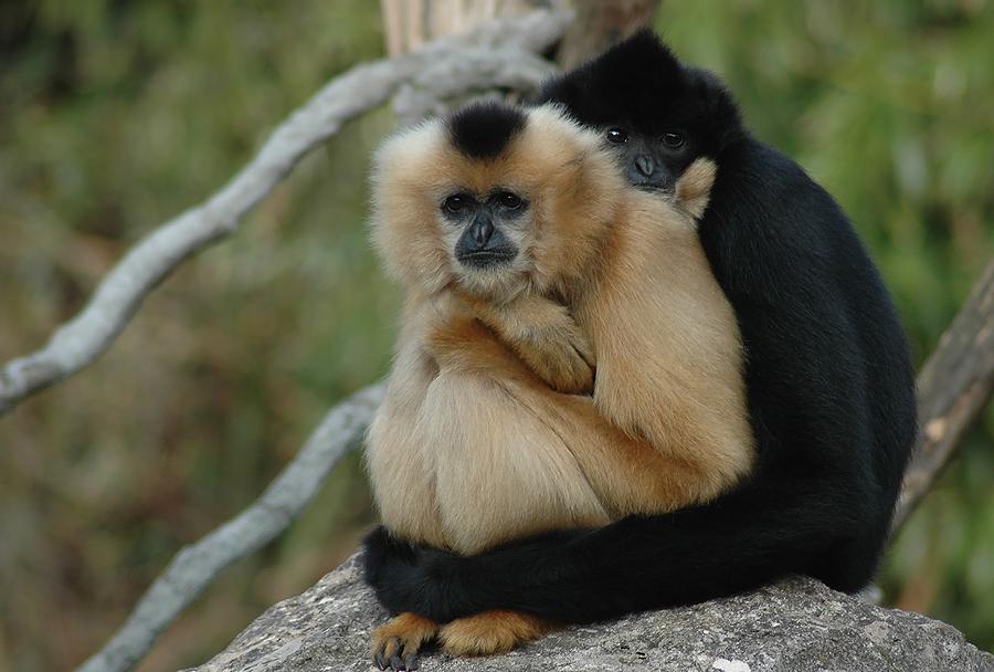 umarmung foto bild tiere zoo wildpark falknerei s ugetiere bilder auf fotocommunity. Black Bedroom Furniture Sets. Home Design Ideas