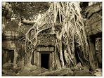 Umarmung im Ta Prohm II - Siem Reap, Kambodscha