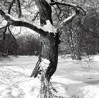 Umarmungsbaum im Schnee