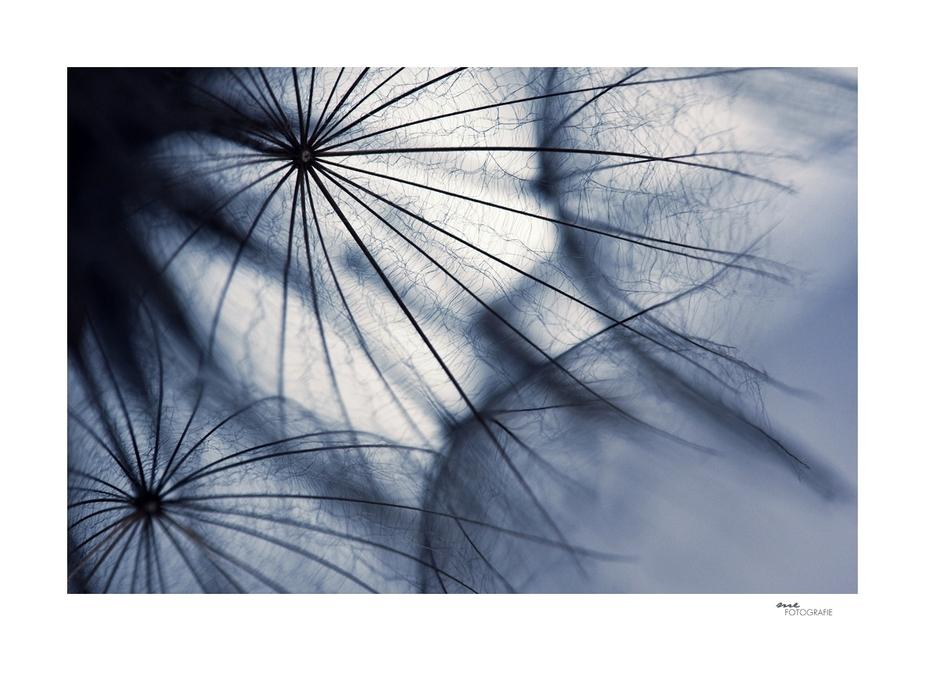 .umbrella.