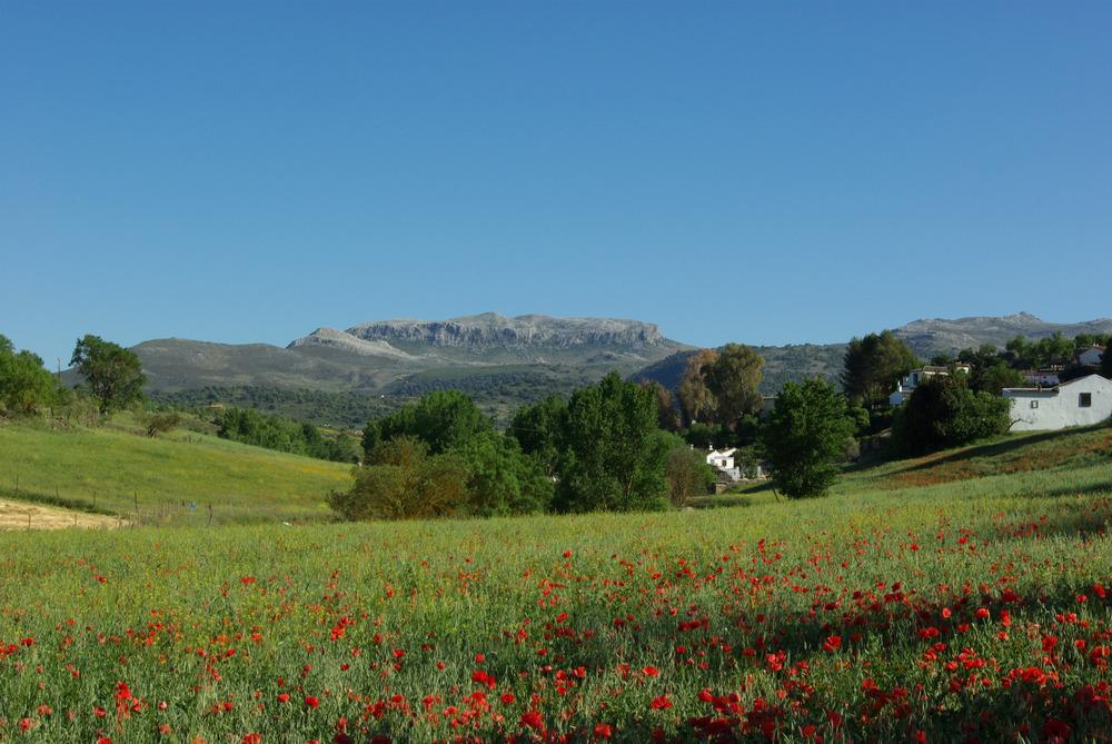 Umgebung von Ronda, Andalusien