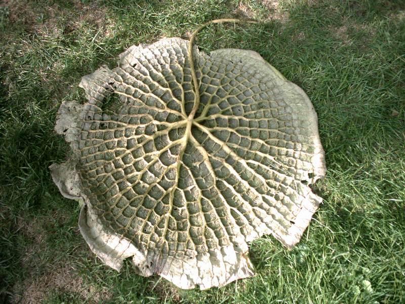 Umgedrehte Wasserlilie oder wie heissen die.. Flora zu Köln, 2003-09-05