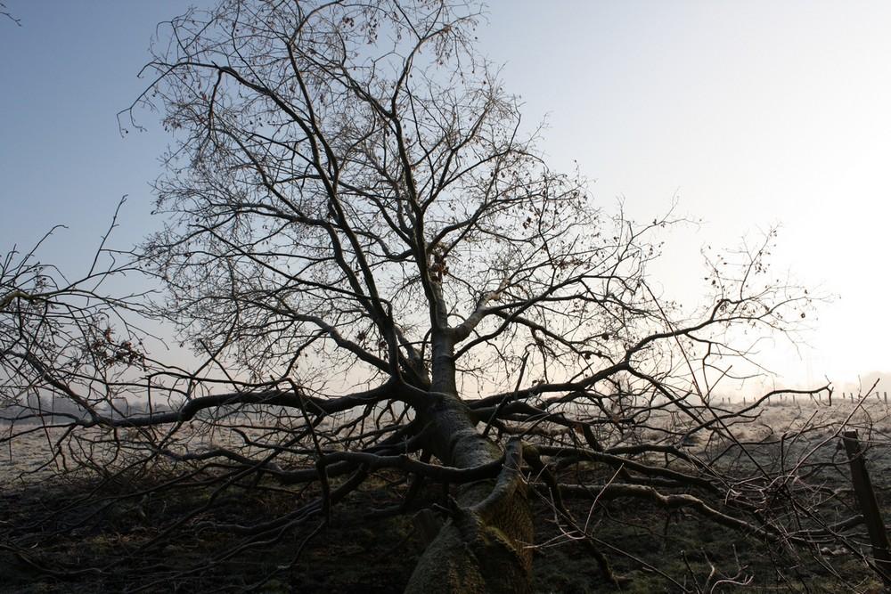 umgefallener Baum im Gegenlicht