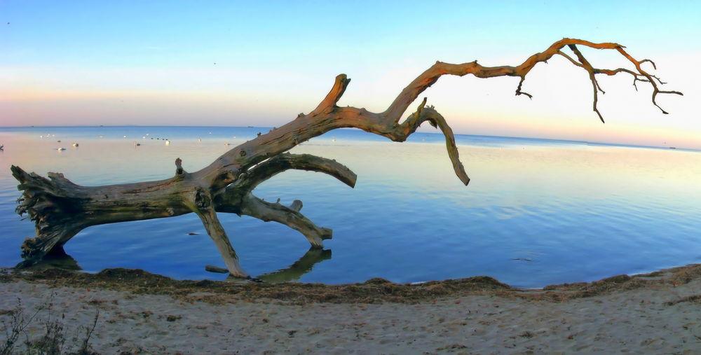 Umgestürzter Baum am Loissiner Strand
