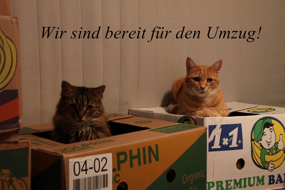 umzug foto bild tiere haustiere katzen bilder. Black Bedroom Furniture Sets. Home Design Ideas