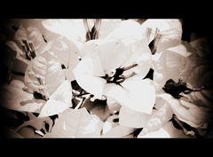Un abito bianco