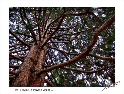 Un abrazo, hermano árbol !!