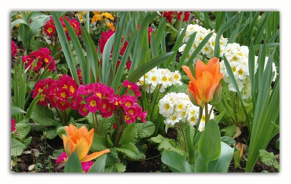 un air de printemps