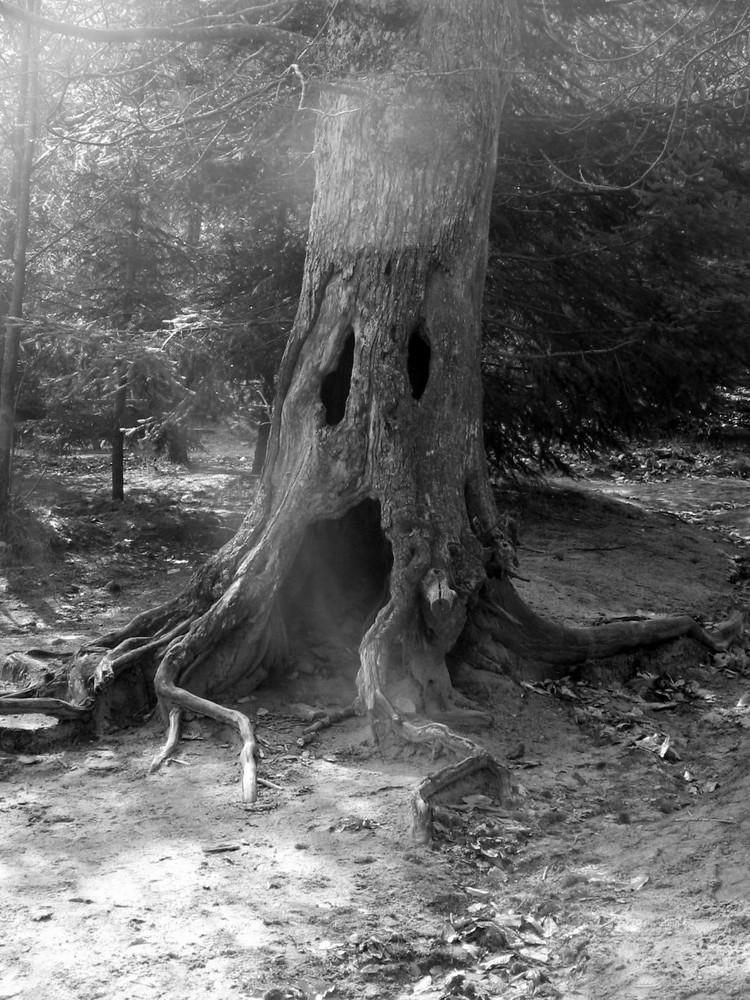 un albero da favola....incantato...